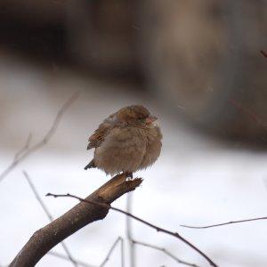 В Тульской области ожидается аномально холодная погода